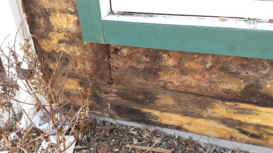 Interior moisture, mold and mildew under old siding